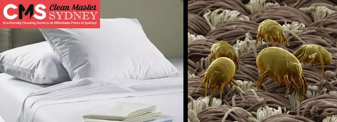 Mattress Dust Mites Removal Mooney Mooney