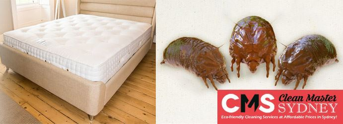 Mattress Dust Mite Treatment