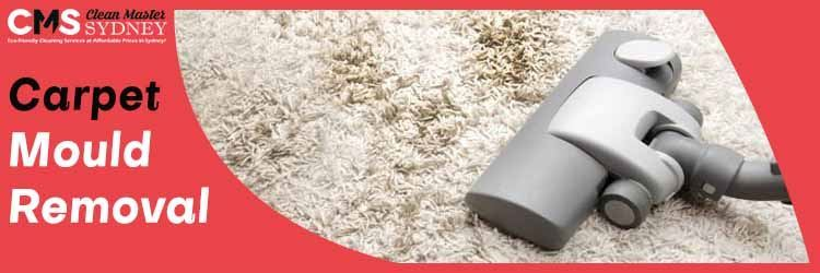 Carpet Mould Removal Experts