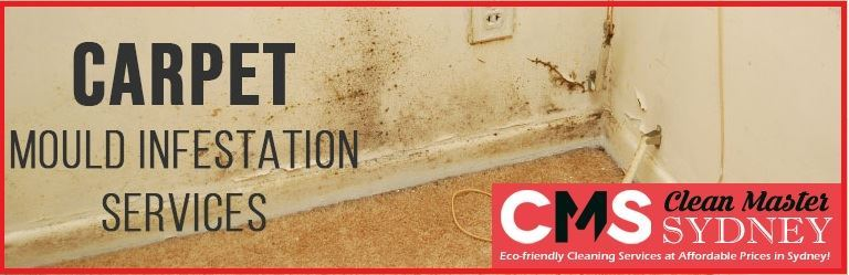 Carpet Mould Infestation Services Botany