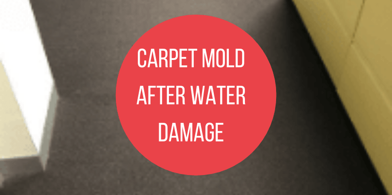 Carpet Mold After Water Damage