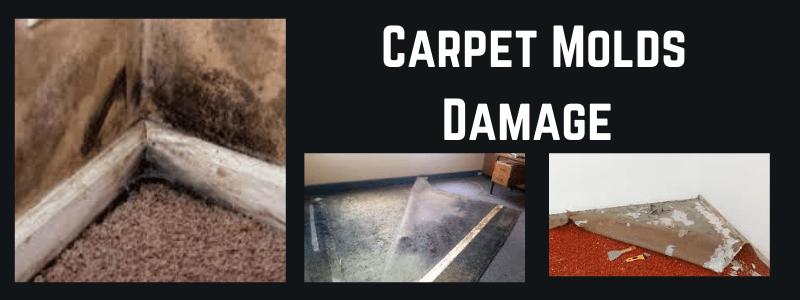 Carpet Molds Damage