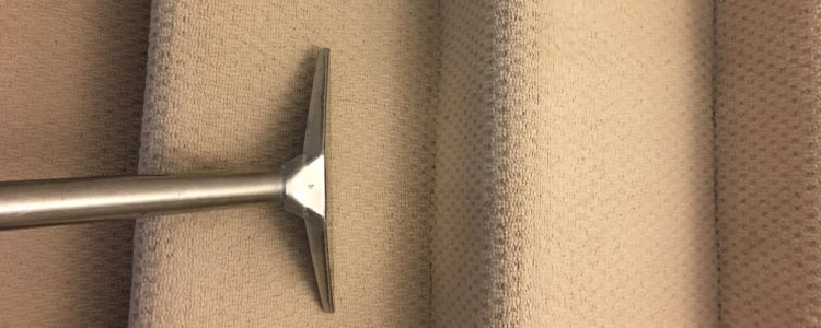Professional Carpet Cleaning Service (3)