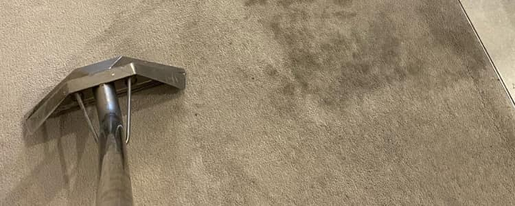 Remove Mold from your Carpets